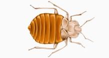 Bronx pest control, Bronx exterminator, pest control services, Pest Control Bronx, bed bug exterminator bronx, ny, bronx county, pest control, exterminator, pest control bronx, exterminator bronx, bronx pest control, bronx bed bug inspection, bed bug inspection bronx, bed bug, bed bugs, bedbug, bedbugs, mice, mouse, rat, rats, rodents, rodent, roach, cockroach